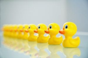 job search plan-ducks in row